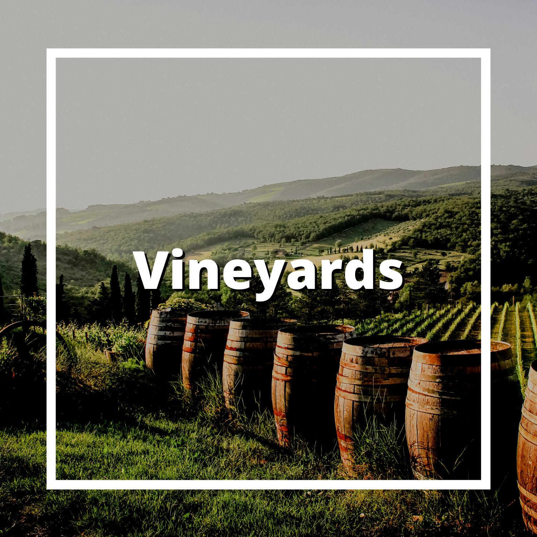 Vineyard, Willamette Valley, Oregon, Wine, Vineyard, Winery, Relax, Leah Hyland, Real Estate Broker